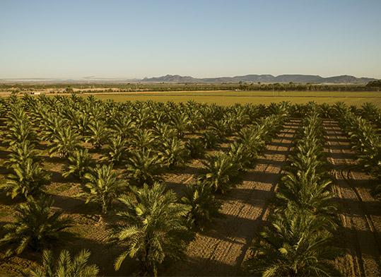 Date tree field